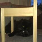 Det er ikke til å stikke under en stol at katten ligger i sofaen.
