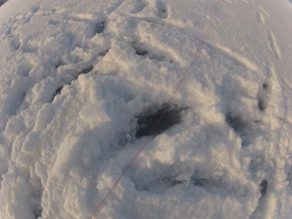 Var ganske fuktig under snøen i dag.