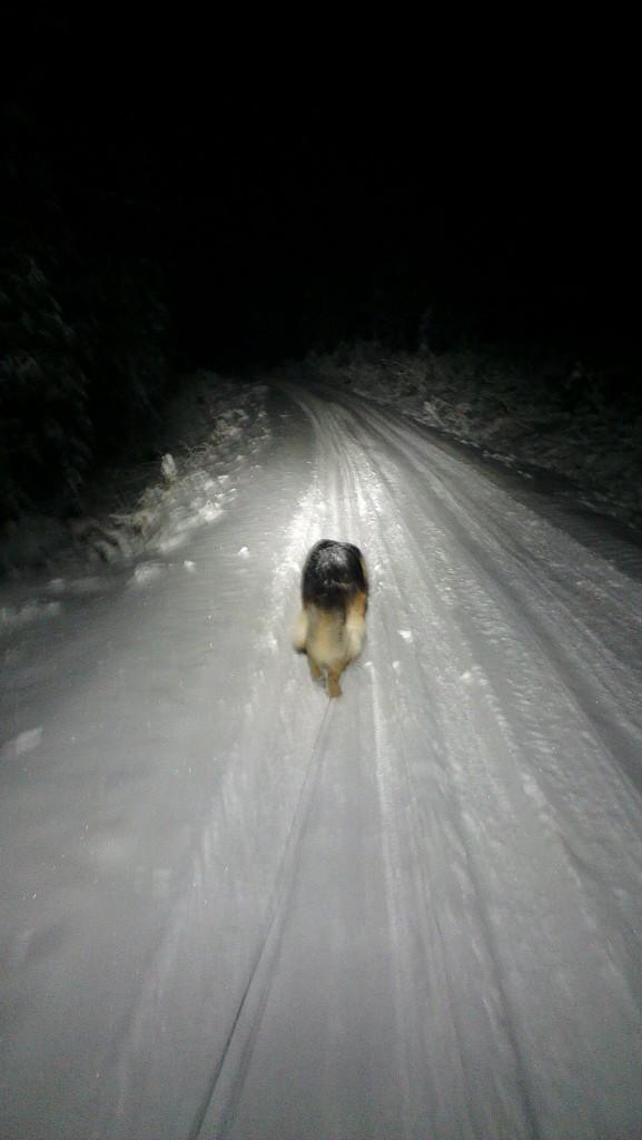 Silvio på tur i snøen