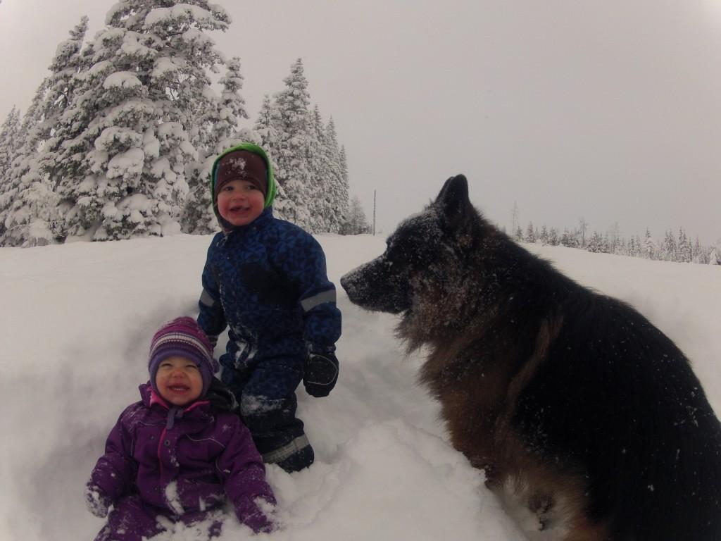 Schæfer og barn i snøen