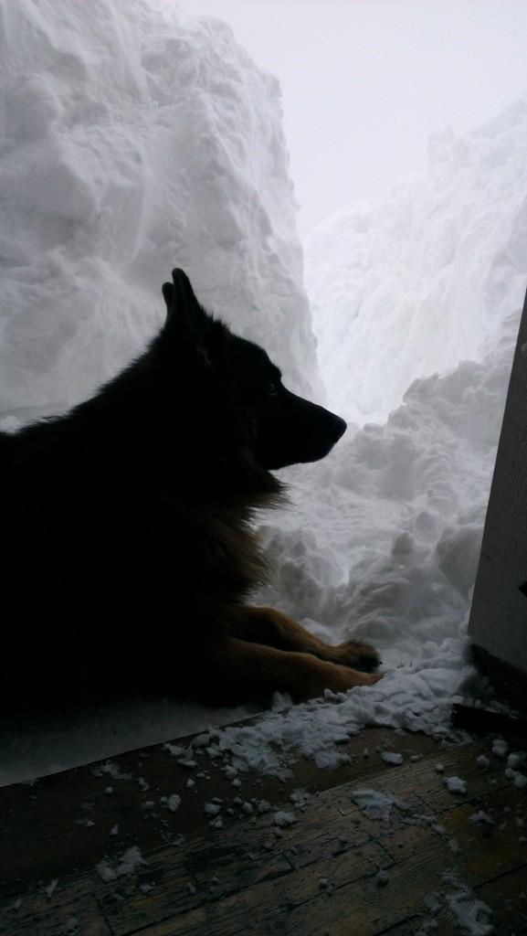 Silvio slapper av i snøen